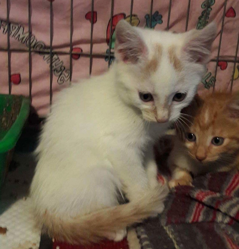 NEIGE chat mâle né le 01/07/2017  adopté en Janvier 2018 par Fabienne Img_0310