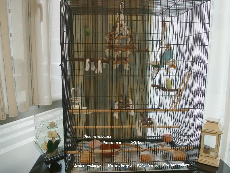 Quel dimension de cage pour plus de deux perruches ? - Page 2 111