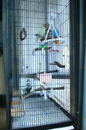 Quel dimension de cage pour plus de deux perruches ? - Page 2 112