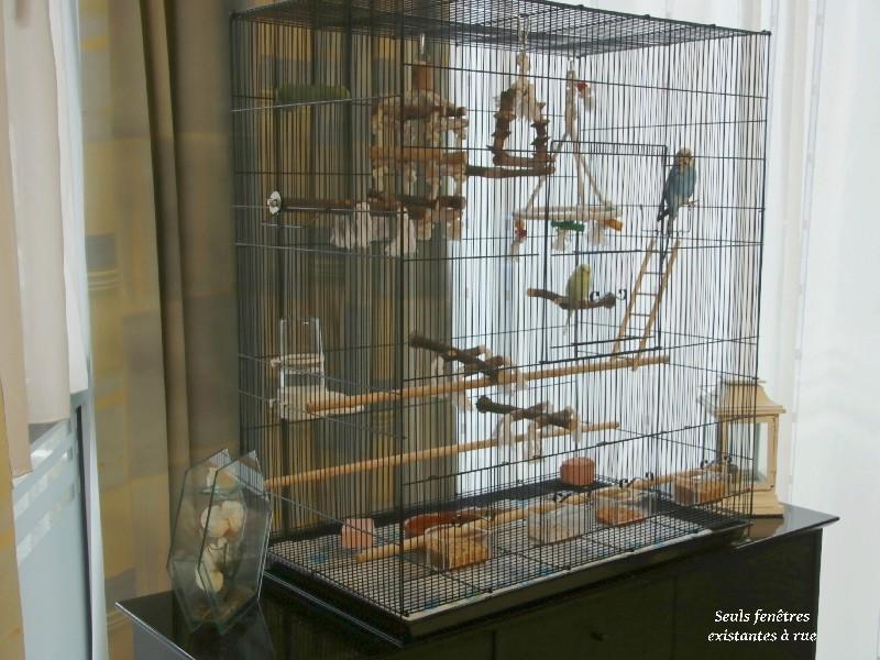 Quel dimension de cage pour plus de deux perruches ? - Page 2 211
