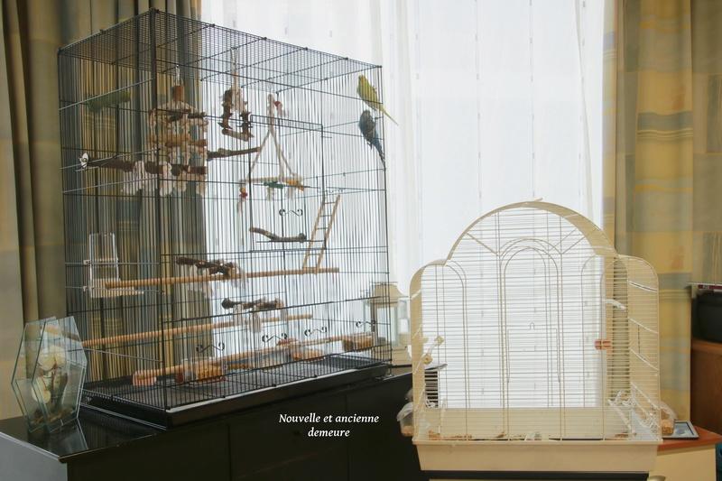 Quel dimension de cage pour plus de deux perruches ? - Page 2 311