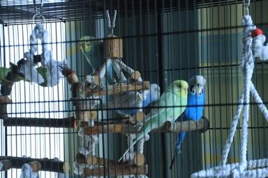 Quel dimension de cage pour plus de deux perruches ? - Page 2 412