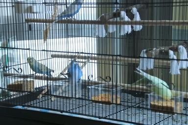Quel dimension de cage pour plus de deux perruches ? - Page 2 511