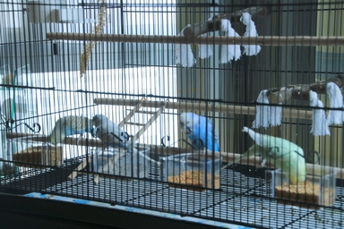 Quel dimension de cage pour plus de deux perruches ? - Page 2 611