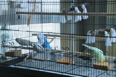 Quel dimension de cage pour plus de deux perruches ? - Page 2 711
