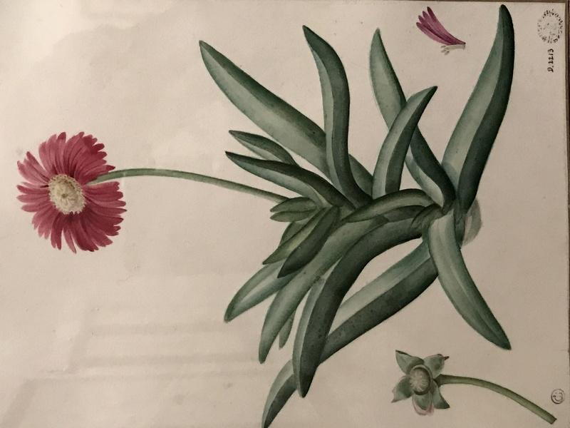 Exposition : Le pouvoir des fleurs, Pierre-Joseph Redouté. Musée de la vie romantique (Paris) Img_8413