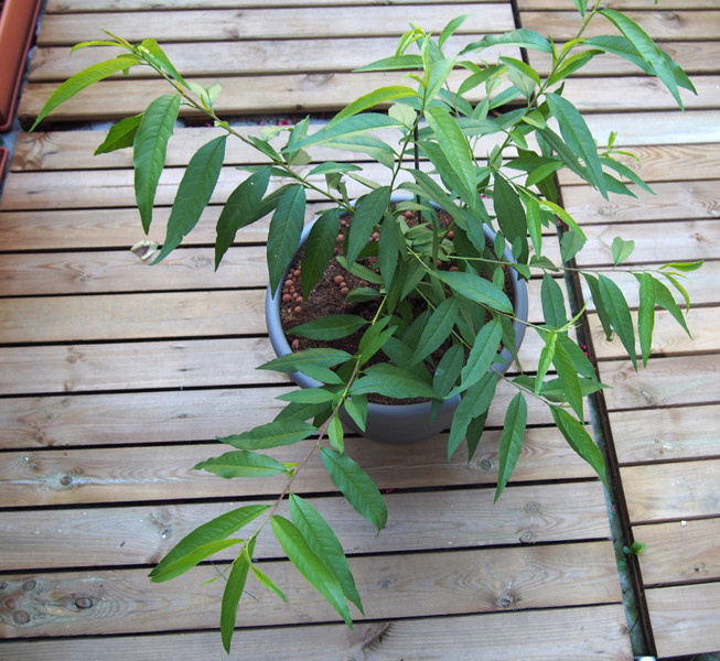 Identification d'une plante Nn0411