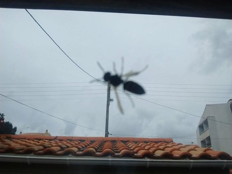 Que faire fasse à nid de guêpe sous la toiture? Photo510