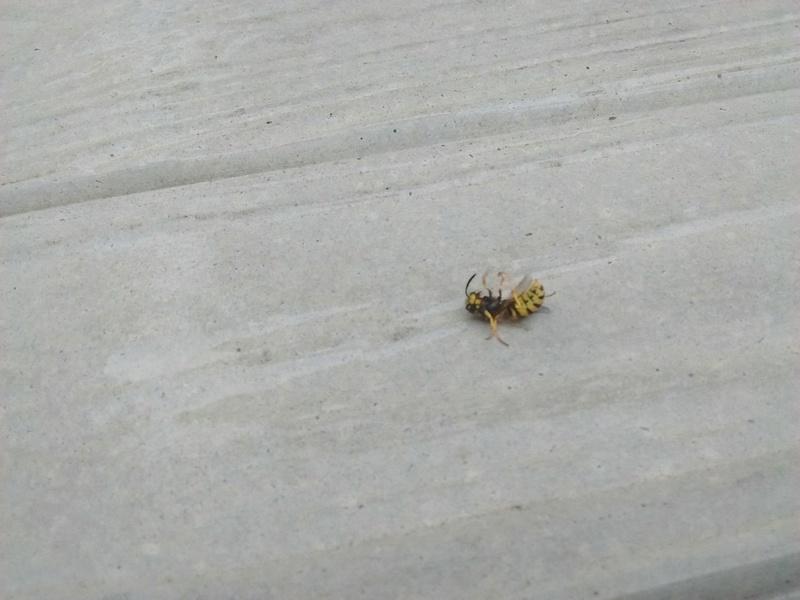 Que faire fasse à nid de guêpe sous la toiture? Photo512