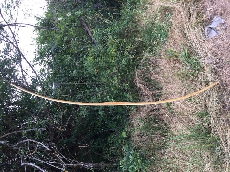 Dos arcos de robinia Img-5721