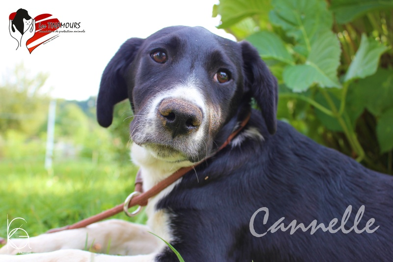 Cannelle EN PHASE D ADAPTATION Canell10
