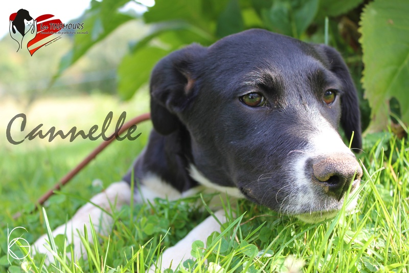 Cannelle EN PHASE D ADAPTATION Canell13