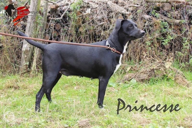 Princesse adoptée Prince13