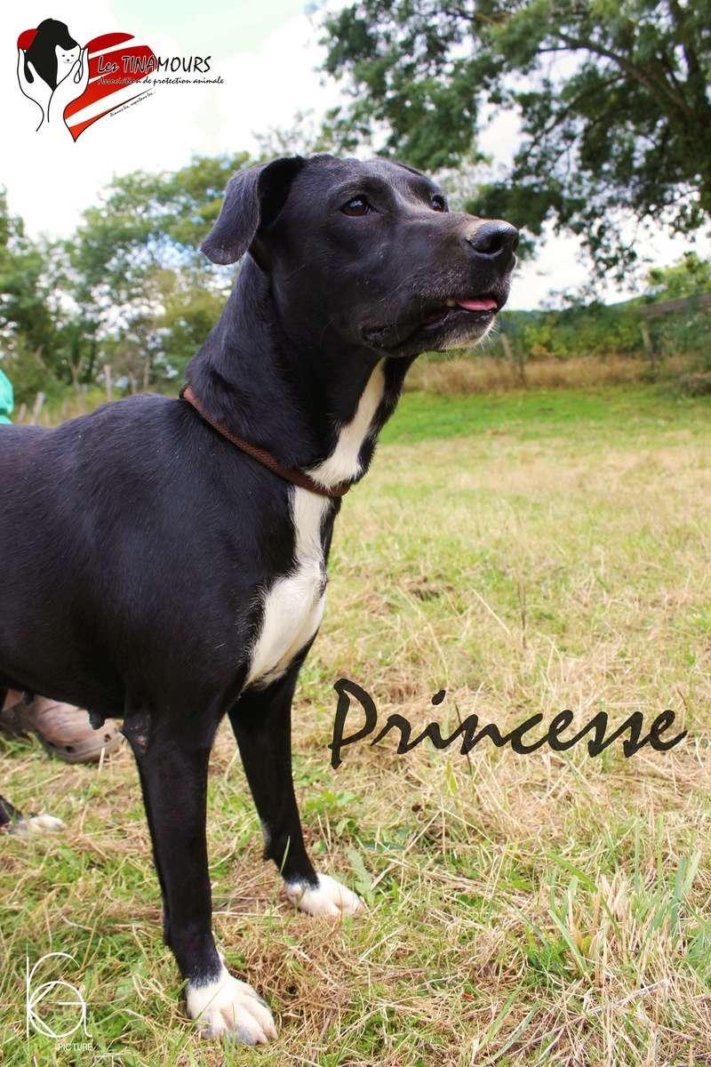 Princesse adoptée Prince14
