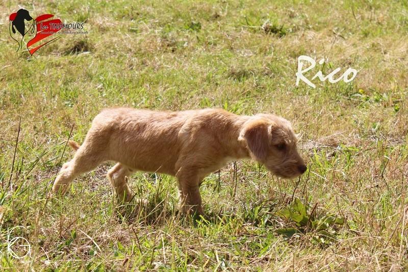 Rico ADOPTE Rico_210