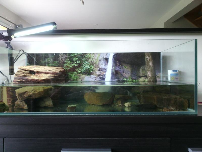 presentation de mon aqua et des tortues  Img_2010