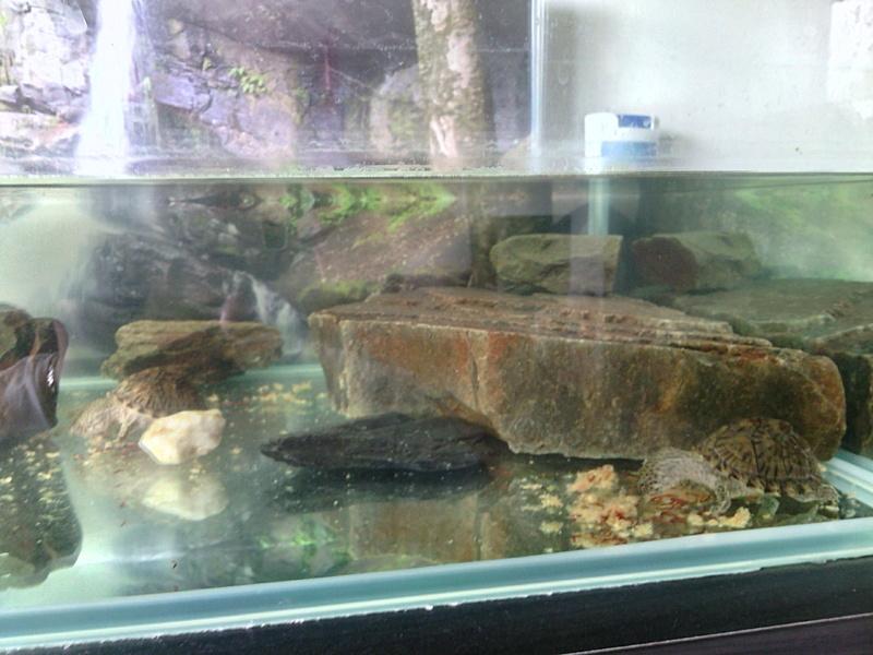 presentation de mon aqua et des tortues  Img_2011