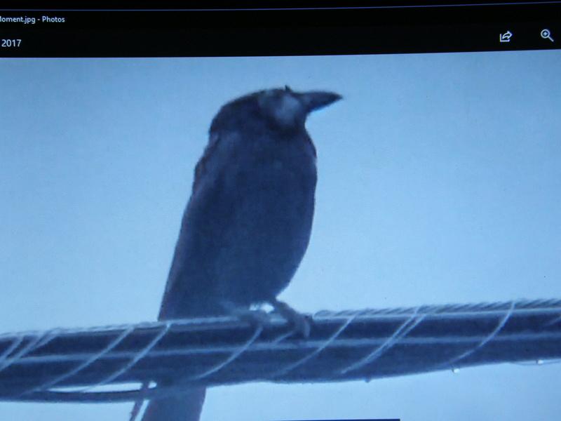 oiseau avec difformité a la tête P9161410