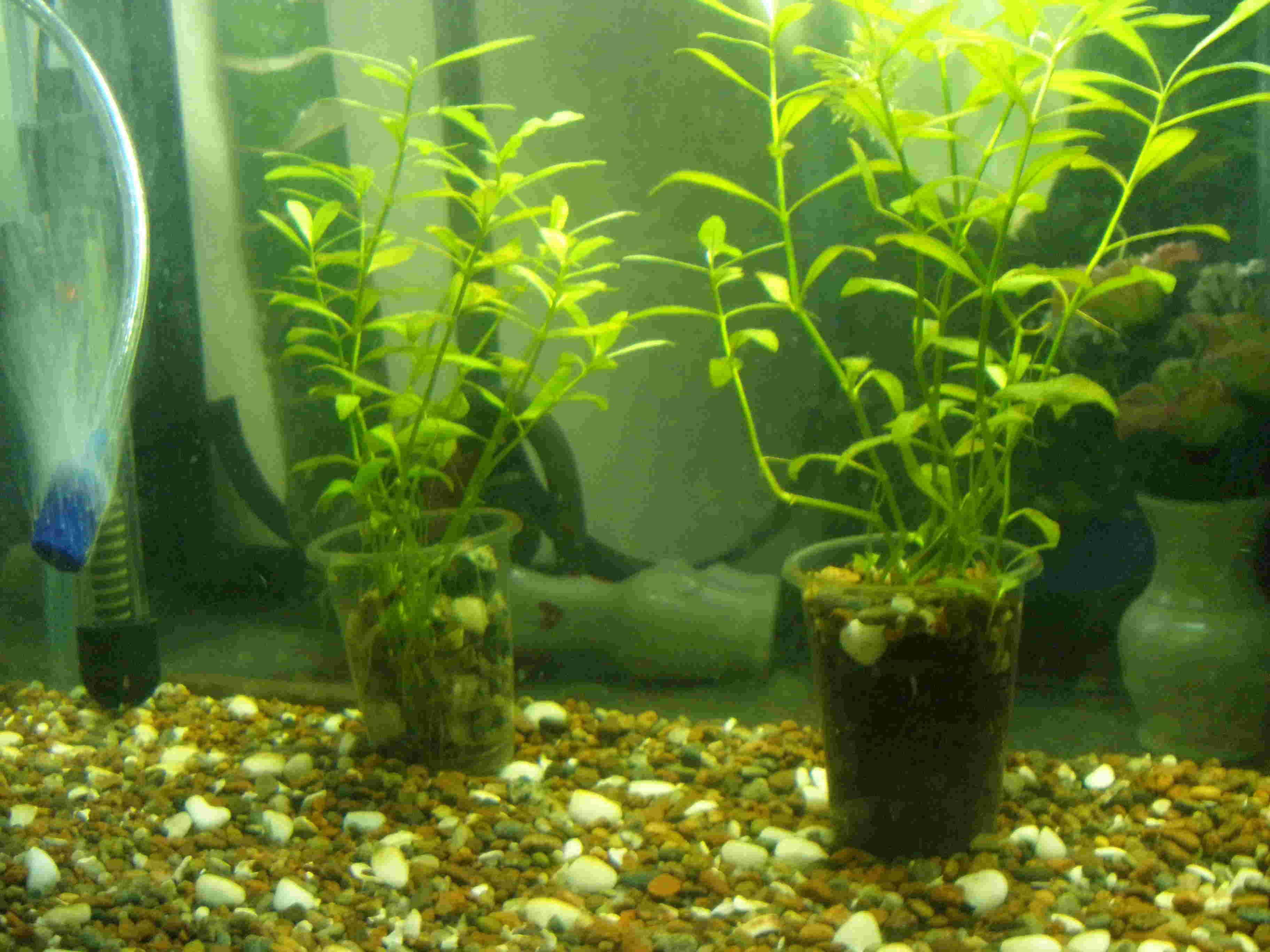 Ayuda con planta acuatica soy novato  P1010512