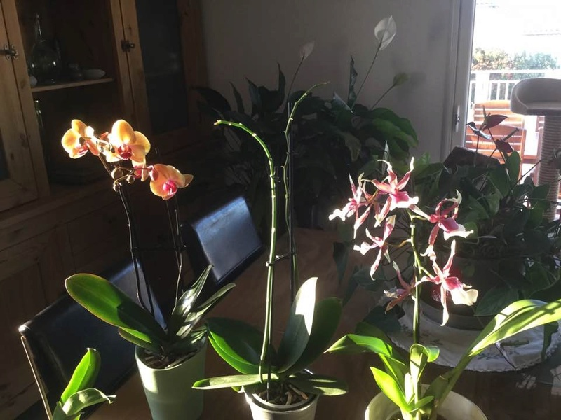 Mes orchidees Img_0510