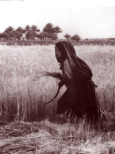 مزارعة عراقية عام 1930م Ou_iau10