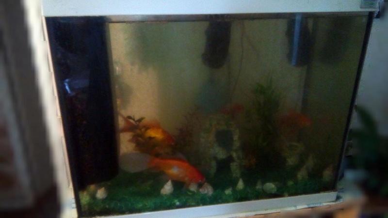 [DON]Aquarium et ses poissons 92 Img_2010