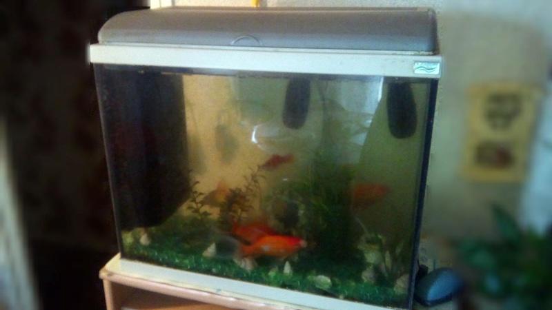 [DON]Aquarium et ses poissons 92 Img_2011