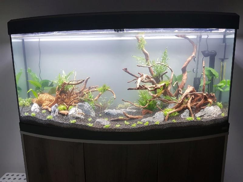débutant (Mis en eau aquarium 260L) Img_2310