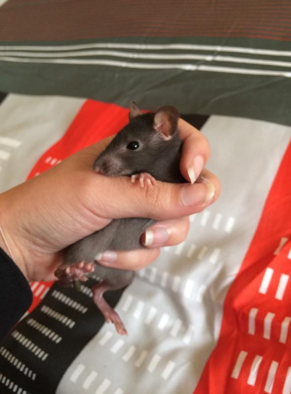 Des experts en rats ? Img_6020