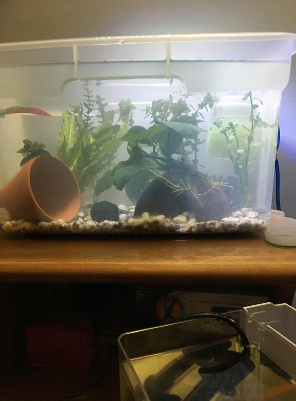 Aquarium beau, bon et pas cher (DIY) Img_1825