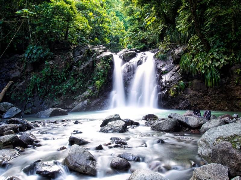 Cascade dans la jungle Jungle10