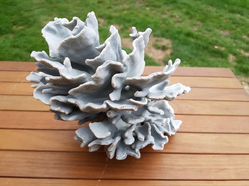 coraux Bleu10