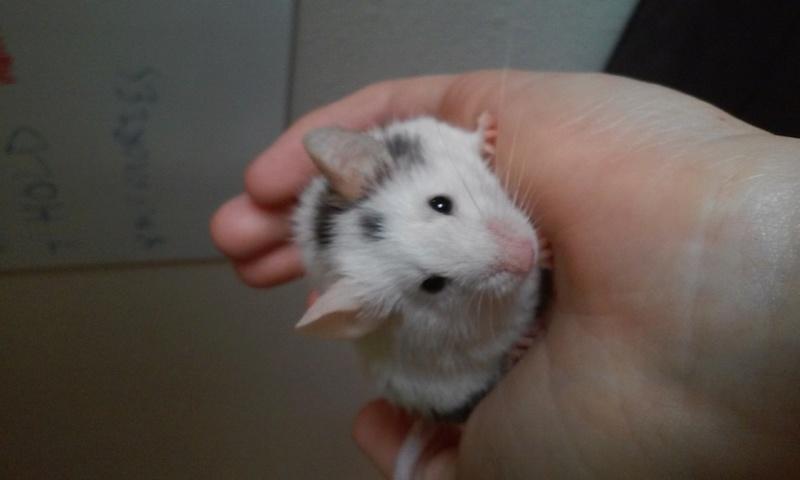 Mr Mouse 08061710