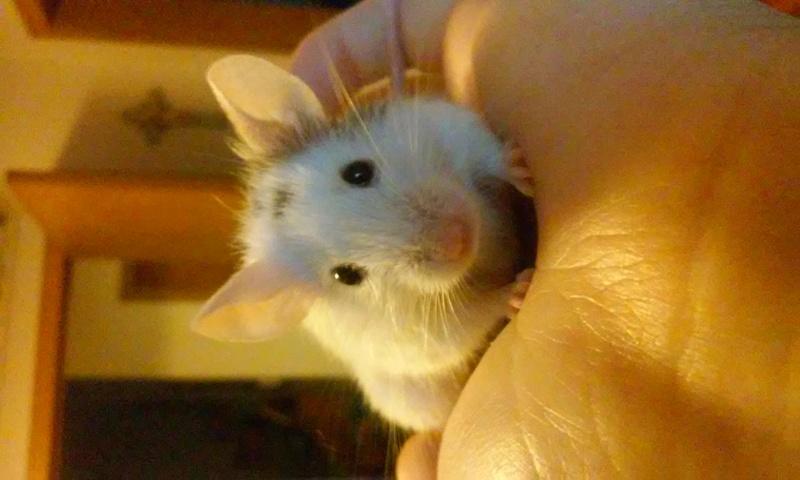 Mr Mouse 10041711