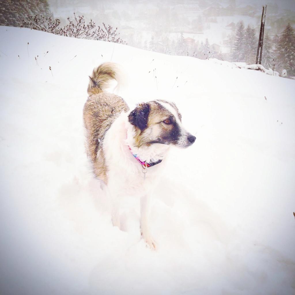 Lexa (ex-Alexa) - femelle - refuge de Târgu Frumos - adoptée (dept 88) - Page 2 Img_2018