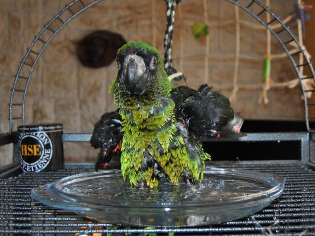 Concours photo n°14: Nos oiseaux prennent le bain  _0151010