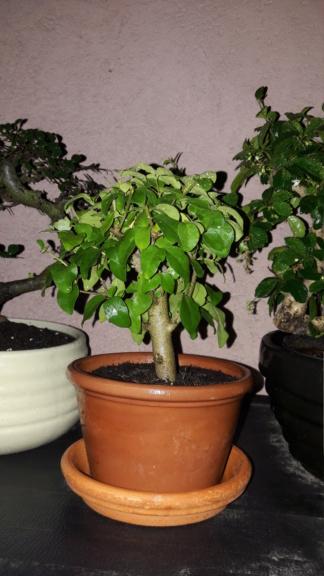Aiuto, problemi nel trovare uno stile per alcune piante. 20180822