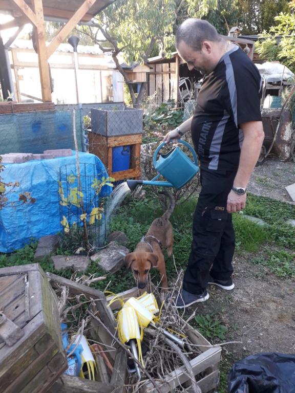Zora - femelle - refuge de Arad - réservée adoption (67) 20181018