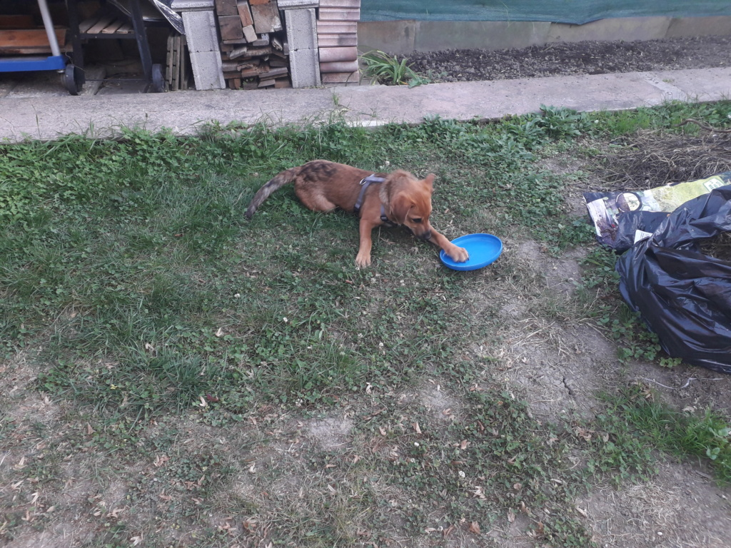 Zora - femelle - refuge de Arad - réservée adoption (67) 20181024