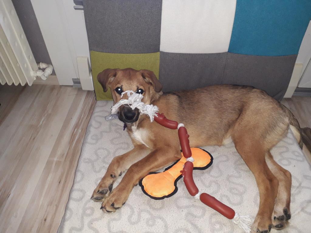 Zora - femelle - refuge de Arad - réservée adoption (67) 20181110