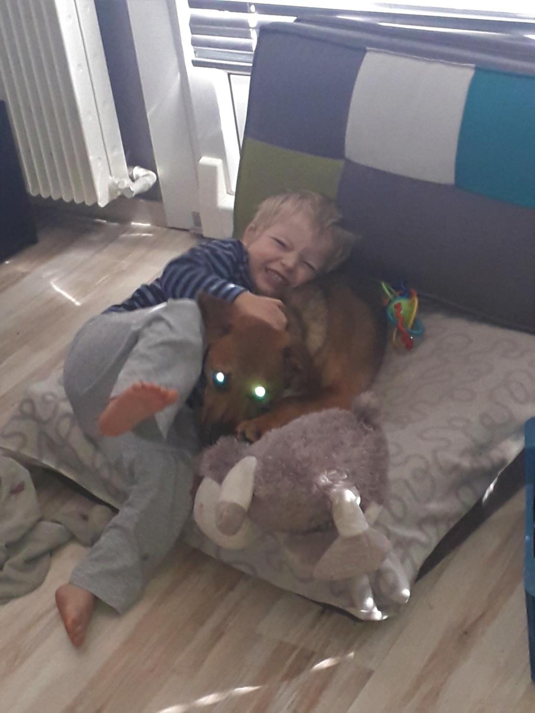 Zora - femelle - refuge de Arad - réservée adoption (67) 20181111