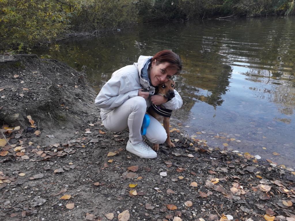 Zora - femelle - refuge de Arad - réservée adoption (67) 20181119