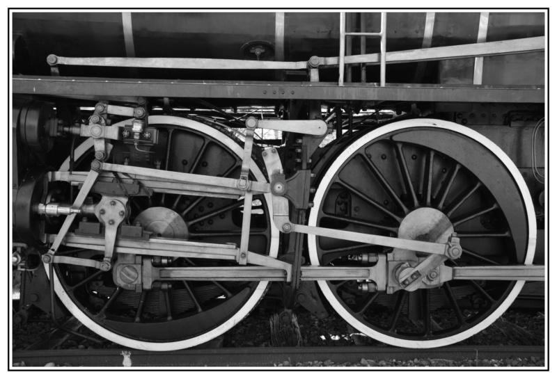 Le train-train en baie de Somme Csc_0010