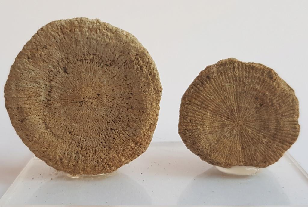 Corales ayuda en Identificacion 20181214
