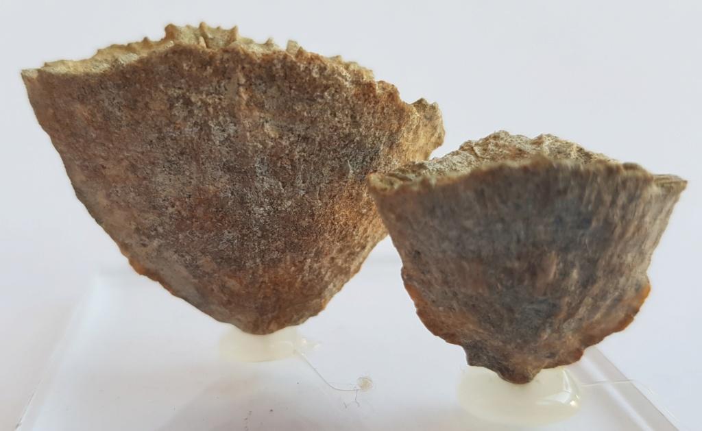 Corales ayuda en Identificacion 20181215