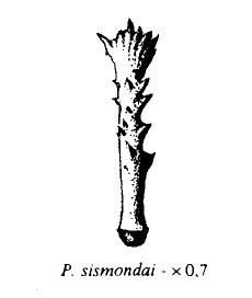 Espina de Prionocidaris sismondai Captur17