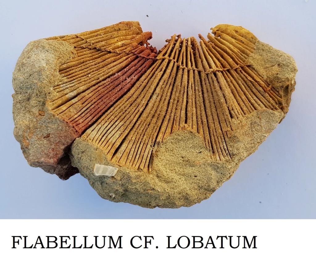 Corales ayuda en Identificacion Flabel10