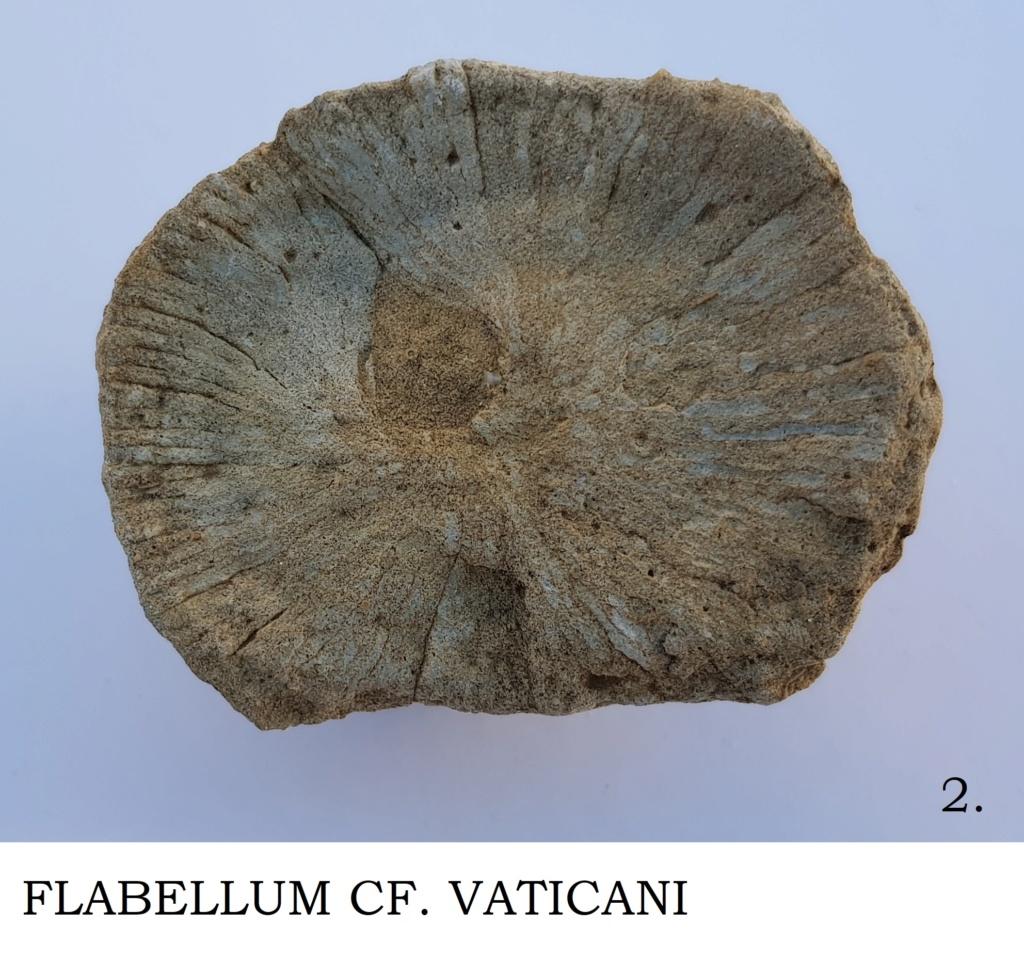 Corales ayuda en Identificacion Flabel11