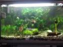 Aquarium 60L Micro fish + Crevette, besoin de conseils Img_2011