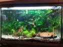 Aquarium 60L Micro fish + Crevette, besoin de conseils Img_2012